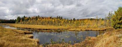 Panoramisch van Dalingskleuren stock afbeelding