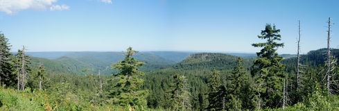 Panoramisch van het Zwarte Bos Royalty-vrije Stock Foto's