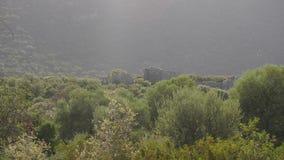 Panoramisch van olijfbos met ruïnes van oud kasteel op achtergrond stock footage