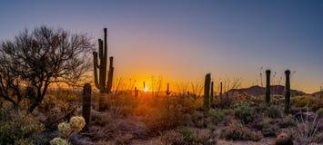 Panoramisch vom Wüstensonnenuntergang Lizenzfreies Stockfoto