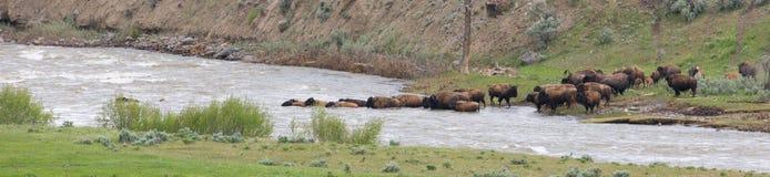 Panoramisch von der Büffelflussüberquerung Lizenzfreie Stockfotografie