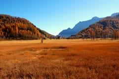 Panoramische Ansicht des Feldes Lizenzfreie Stockbilder