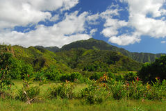 Panoramische Ansicht in Hawaii Lizenzfreies Stockbild