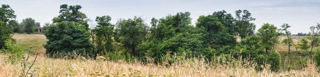 Panoramische Ansicht Landschaft eines schönen Tales mit grünen Bäumen und Feldgräsern am Hintergrund des blauen Himmels Lizenzfreies Stockbild