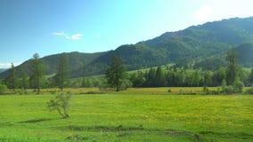 Panoramische Ansicht nave Steigungen mit Blumen Berggebiet stock footage