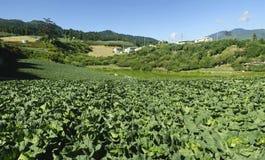 Panoramische Ansichten des schönen Gemüsebauernhofes. Stockbild