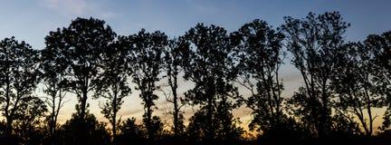Panoramische Bäume nach dem Sonnenuntergang Stockfotos