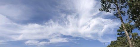 Panoramische bomen en hemel stock afbeelding