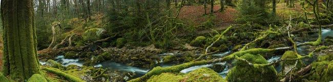 Panoramische breite Ansicht über altes Waldwaldland in Devon, Großbritannien Stockbild