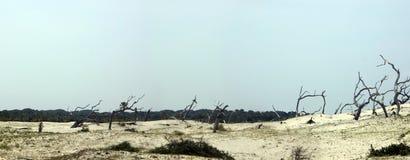 Panoramische de duinen van het zand Royalty-vrije Stock Afbeeldingen
