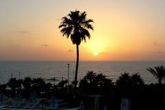 Panoramische foto van de kust met palmen bij zonsondergang stock foto's