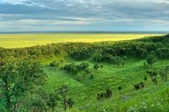 Panoramische heuvelsmening Stock Foto's