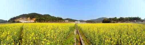 Panoramische Landschaft des schönen Frühlinges schoss mit blühendem Canola Lizenzfreies Stockfoto