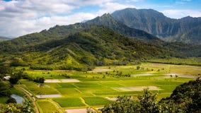Panoramische Landschaftsansicht von Hanalei-Tal und von grünen Wasserbrotwurzelfeldern Lizenzfreies Stockbild