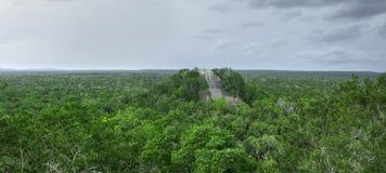 Panoramische Maya Temple 1 in Calakmul, Campeche Stockfotografie