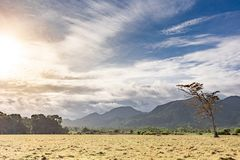 Panoramische sch?ne Ansicht ?ber Weidenfeld und -h?gel mit einsamem gestorbenem Baum Bew?lkter blauer Himmel und gelbes trockenes stockfoto