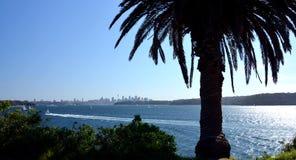 Panoramische Stadtansicht mit Palme Lizenzfreie Stockfotos