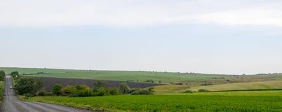Panoramische Straße durch gepflogene Felder Stockfotos