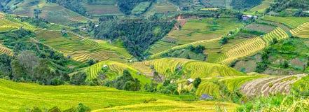 Panoramische Terracingkornjahreszeit in den Hochländern Yen Bai, Vietnam Lizenzfreie Stockfotografie
