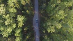 Panoramische Vogelperspektive auf Waldweg von oben Video genommen unter Verwendung des Brummens Draufsicht über Bäume Weise unter stock footage