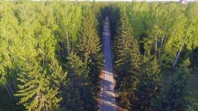 Panoramische Vogelperspektive auf Waldweg von oben Video genommen unter Verwendung des Brummens Draufsicht über Bäume Weise unter stock video