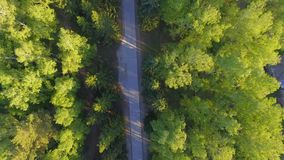 Panoramische Vogelperspektive auf Waldweg von oben Video genommen unter Verwendung des Brummens Draufsicht über Bäume Weise unter stock video footage