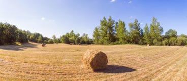 Panoramische Wiese mit dem Gras gemäht Stockbild