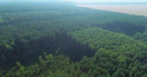 Panoramischer Bereich des Wachsens hölzern für weiteren Ausschnitt stock footage