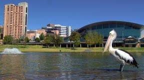 Panoramischer Pelikan lizenzfreies stockfoto