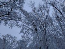 panoramischer Schuß (digitale Zusammensetzung) stockfotos