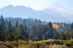Panoramischer Schuss des mysteriösen nebelhaften Kieferwaldes mit gelber Stelle und Bergen Stockfotos