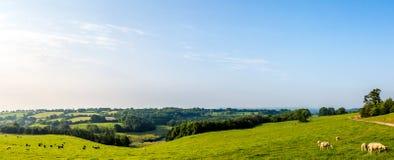 Panoramisches Bild Süd-Somerset Countrysides Lizenzfreies Stockfoto