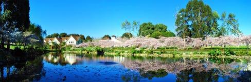 Reflexion von Kirschblüte-Bäumen auf See Stockfotografie