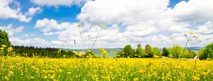 Panoramisches Blumenfeld im Frühjahr Lizenzfreie Stockfotos