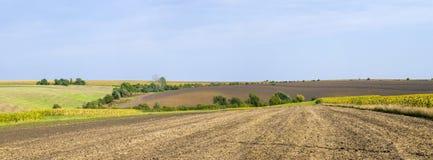 Panoramisches gepflogenes Feld in Ukraine Lizenzfreies Stockfoto