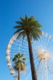 Panoramisches Rad mit Palme Stockfoto