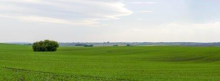 Panoramisches schönes grünes Feld Lizenzfreie Stockbilder