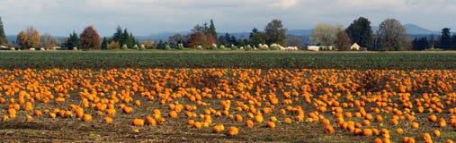 Panoramisches Szenen-Bauernhof-Feld-Kürbis-Flecken-Gemüse-reife Ernte Stockfoto