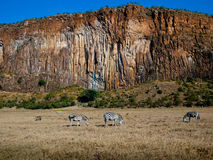 Panoramma canyon with three zebras. And warthogs on a background of blue sky Stock Photography