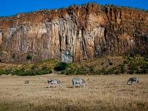 Panoramma-Schlucht mit drei Zebras stockfotografie