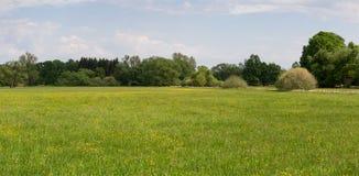 Panoramtic sikt till ängen med blomman och stora träd Tjeckiska länder arkivbild