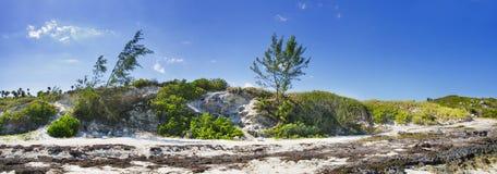 panoramy brzegowa roślinność fotografia stock