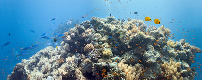 panoramy koralowa scena Fotografia Stock