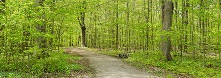 panoramy lasowa wiosna Fotografia Royalty Free
