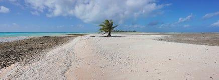Panoramy sandbar jeden kokosowy drzewo Francuski Polynesia obraz royalty free