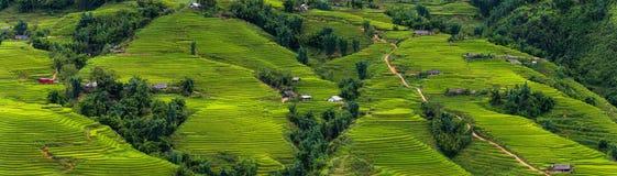 Panoramy scena ryżu taras na światła dziennego sunshade a i pola Zdjęcie Royalty Free
