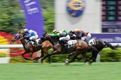 Panorera hästkapplöpning royaltyfria bilder