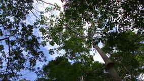 Panorera markisen av amasonregnskogen lager videofilmer