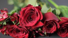Panorera skottet av röda rosor
