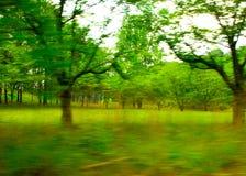 Panorera träd, North Carolina arkivbild